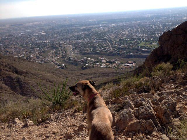 Fauna silvestre en Franklin Mountains State Park