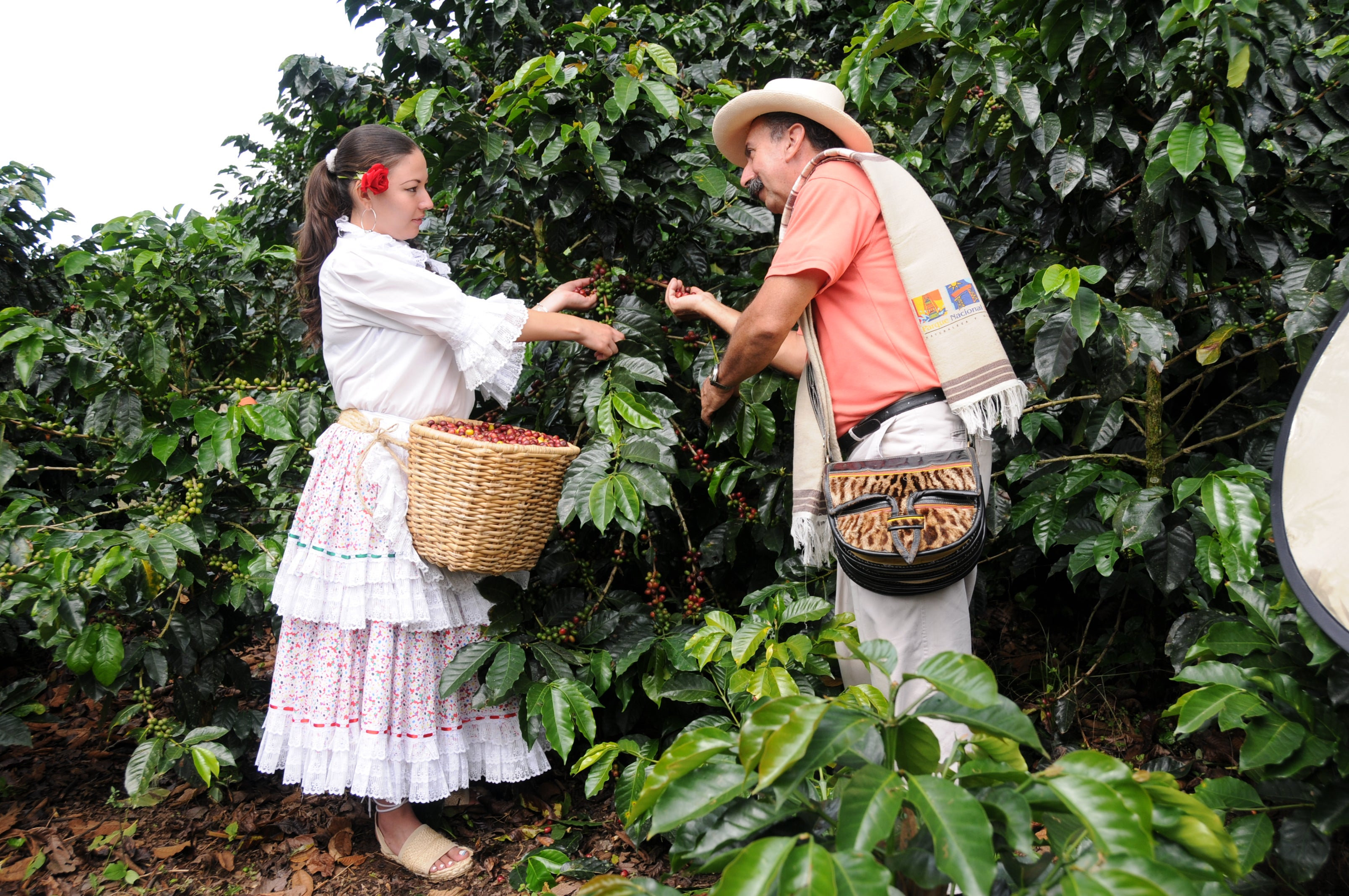 National Coffee Park