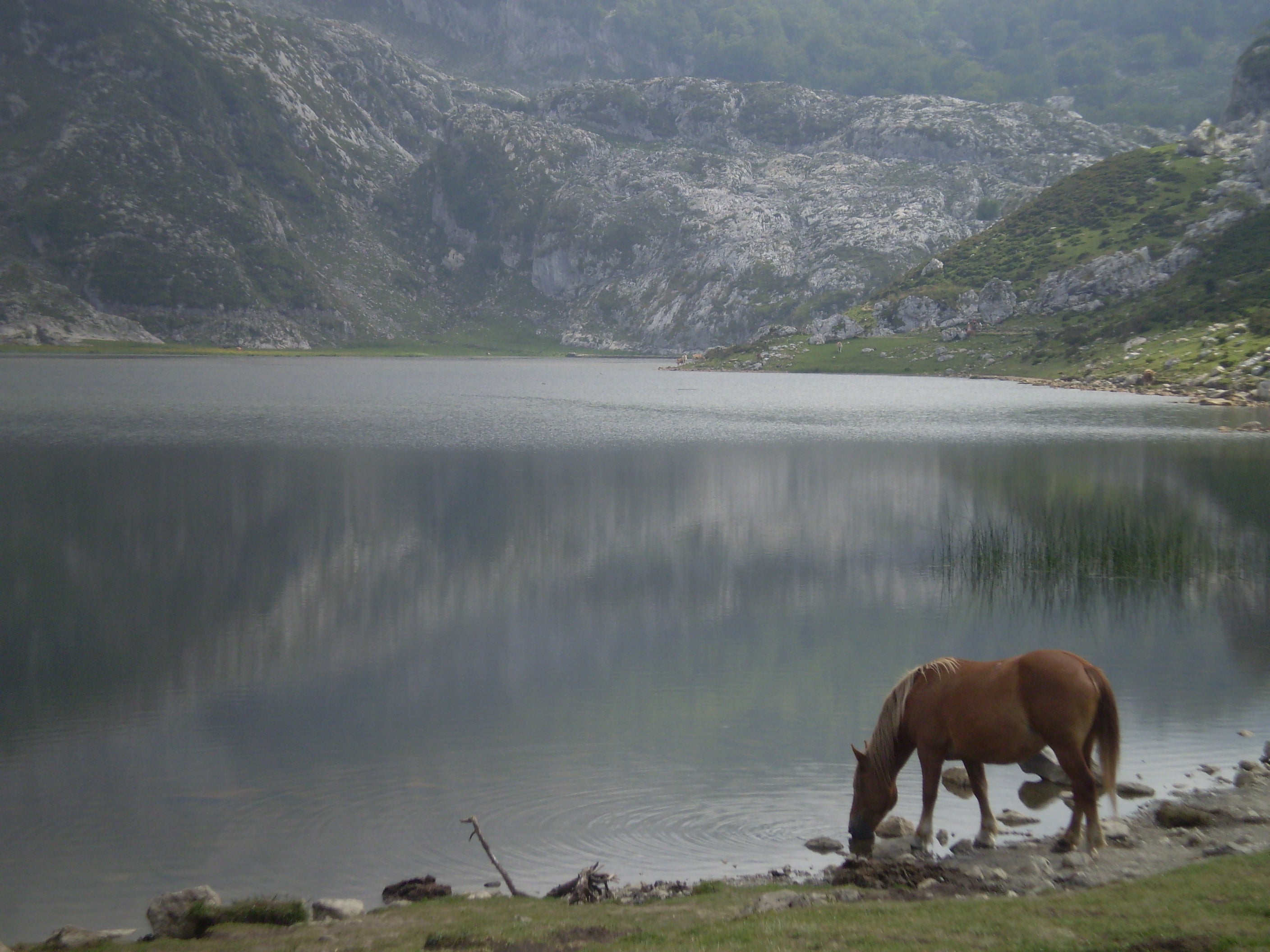 Horse in The Lakes of Covadonga - Enol and Ercina lakes