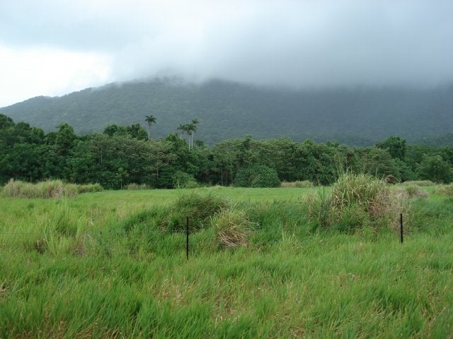 Finca en Cape Tribulation