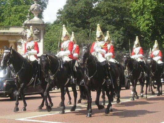 Caballo en Cambio de guardia en el Buckingham Palace