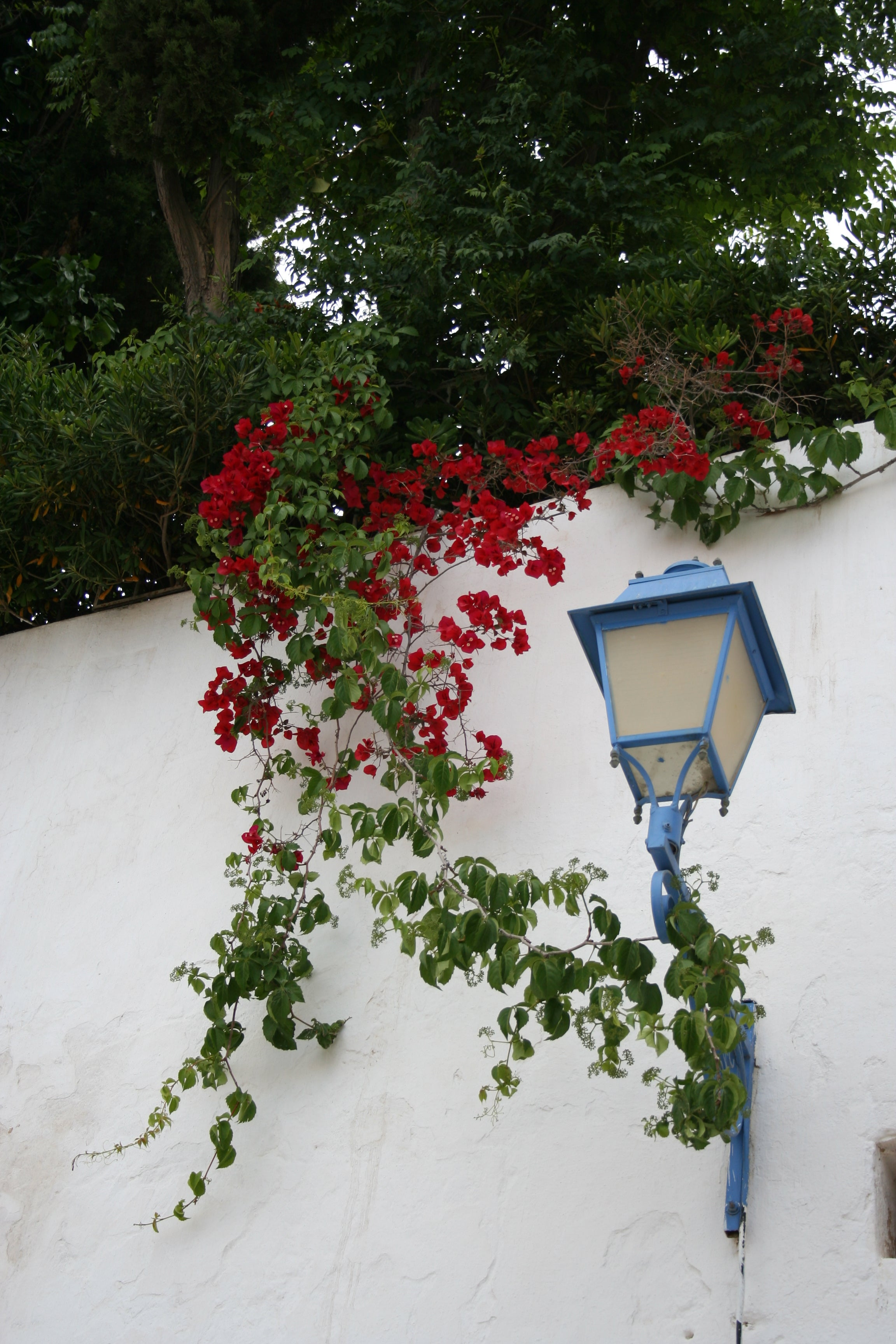 Pared en Sidi Bou Saïd