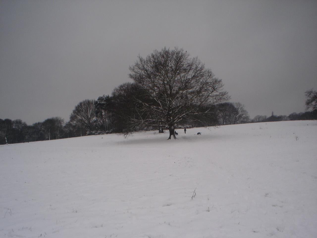 Tormenta de nieve en Parque de Hampstead Heath