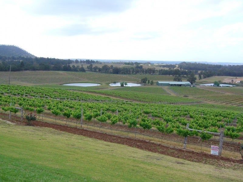 Verde en Hunter Valley