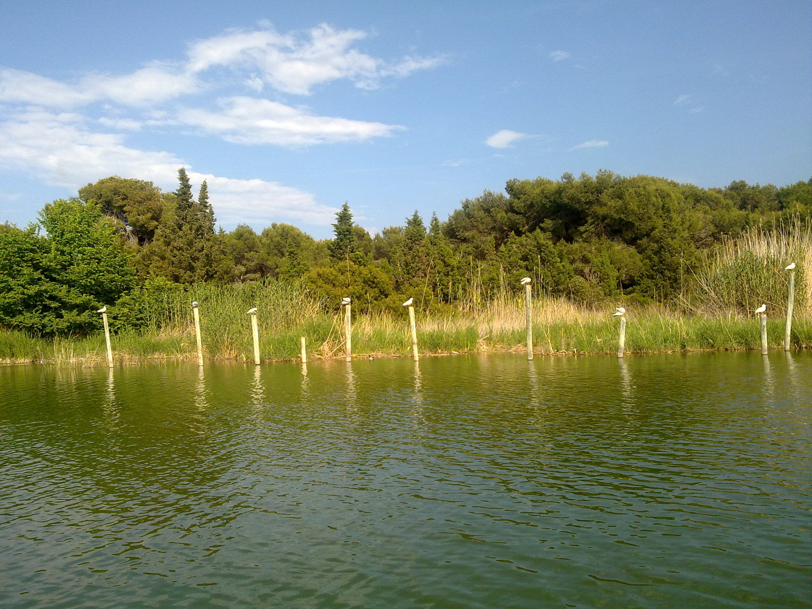 Fish Pond in Albufera Natural Park