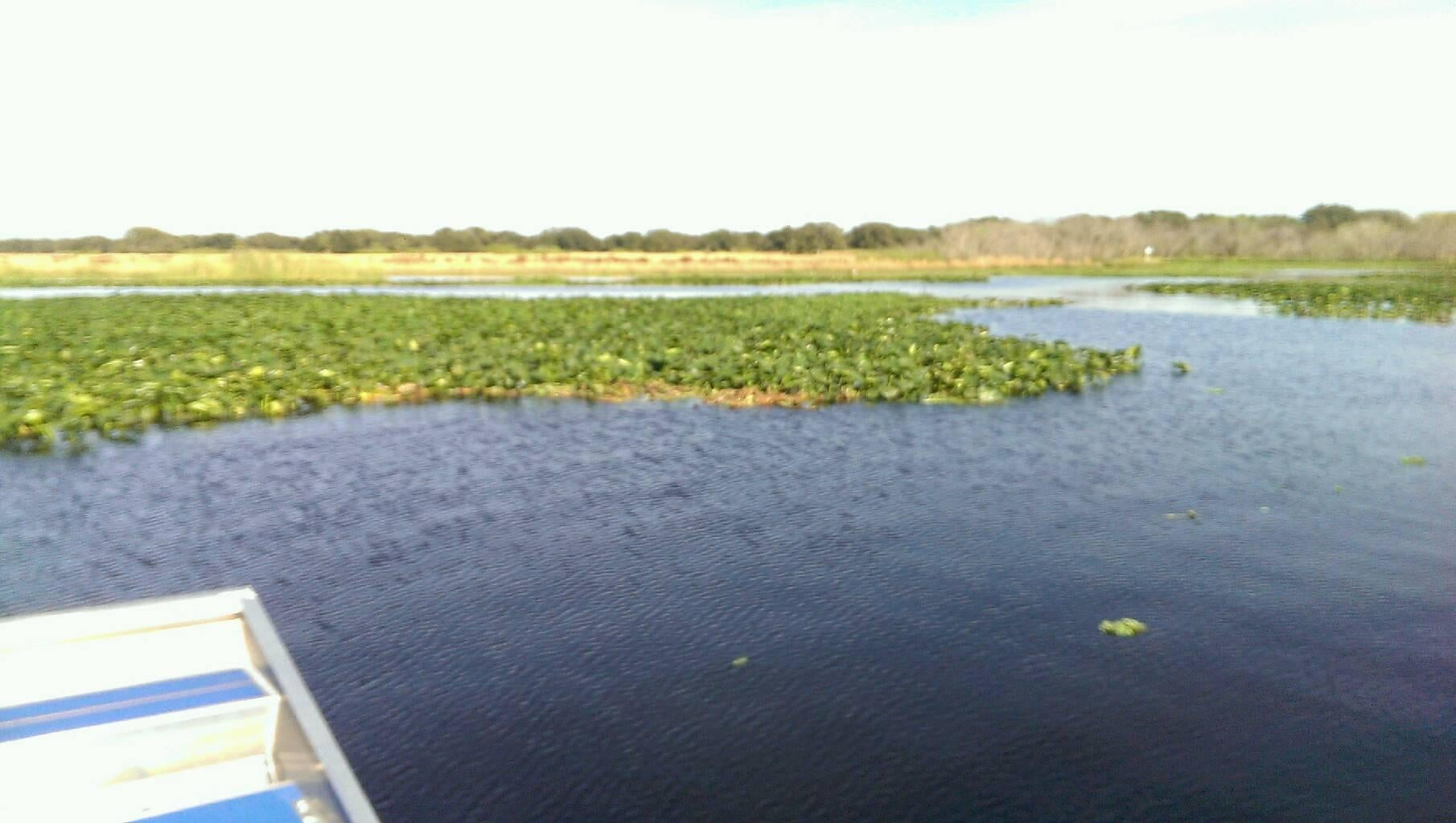 Embalse en Kissimmee Swamp Tours