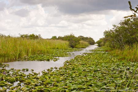 Coopertown Airboat Ride
