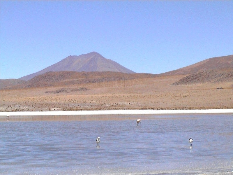 Costa en Laguna Colorada