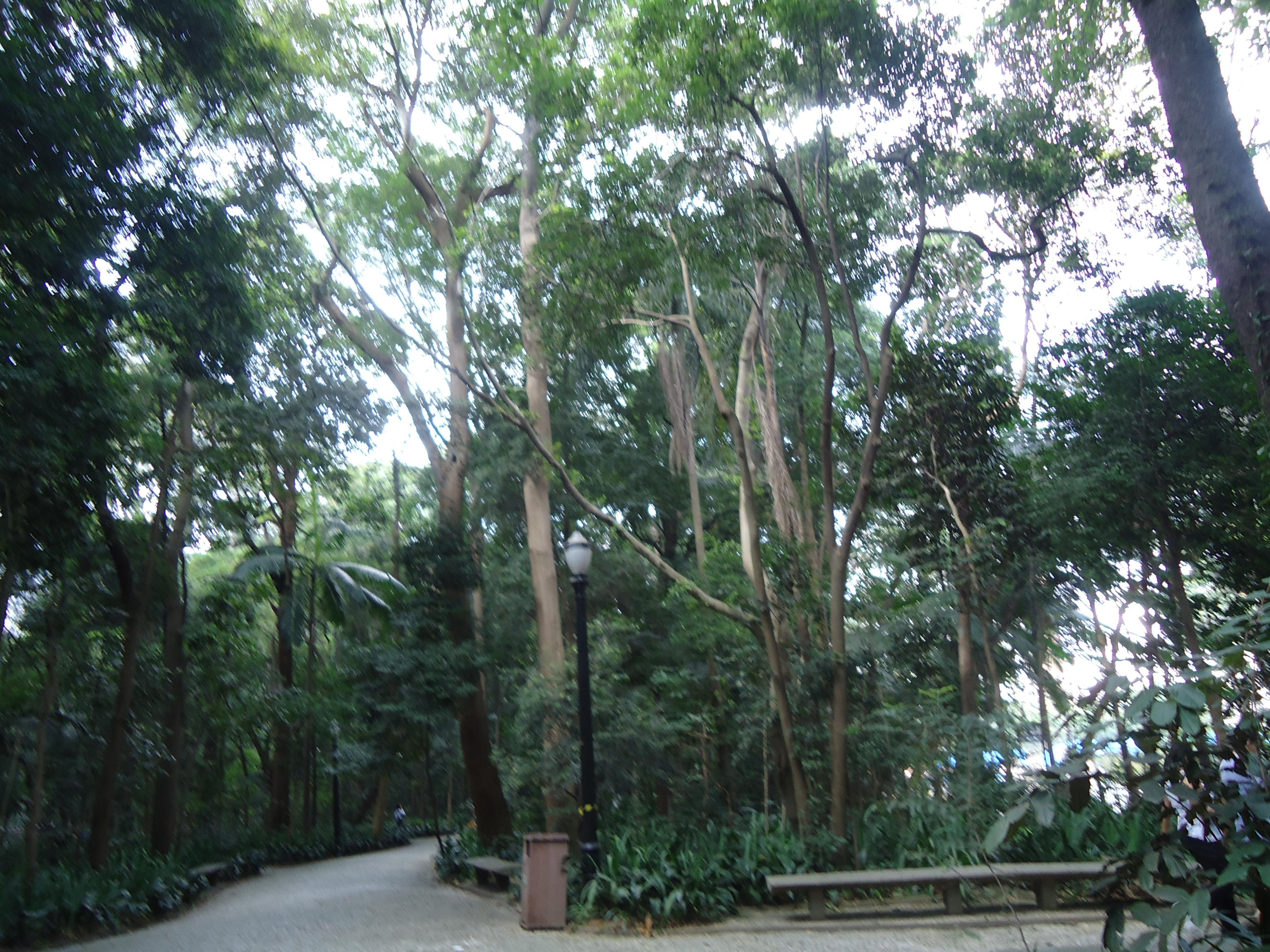 Bosque en Parque Trianon
