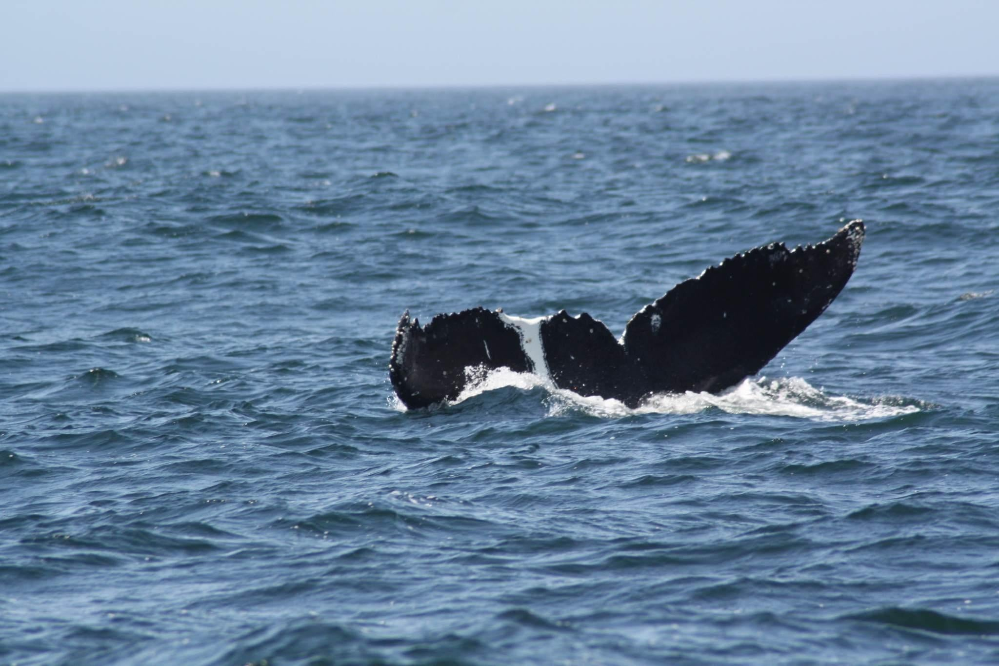 Ballena en Monterey Bay Whale Watch