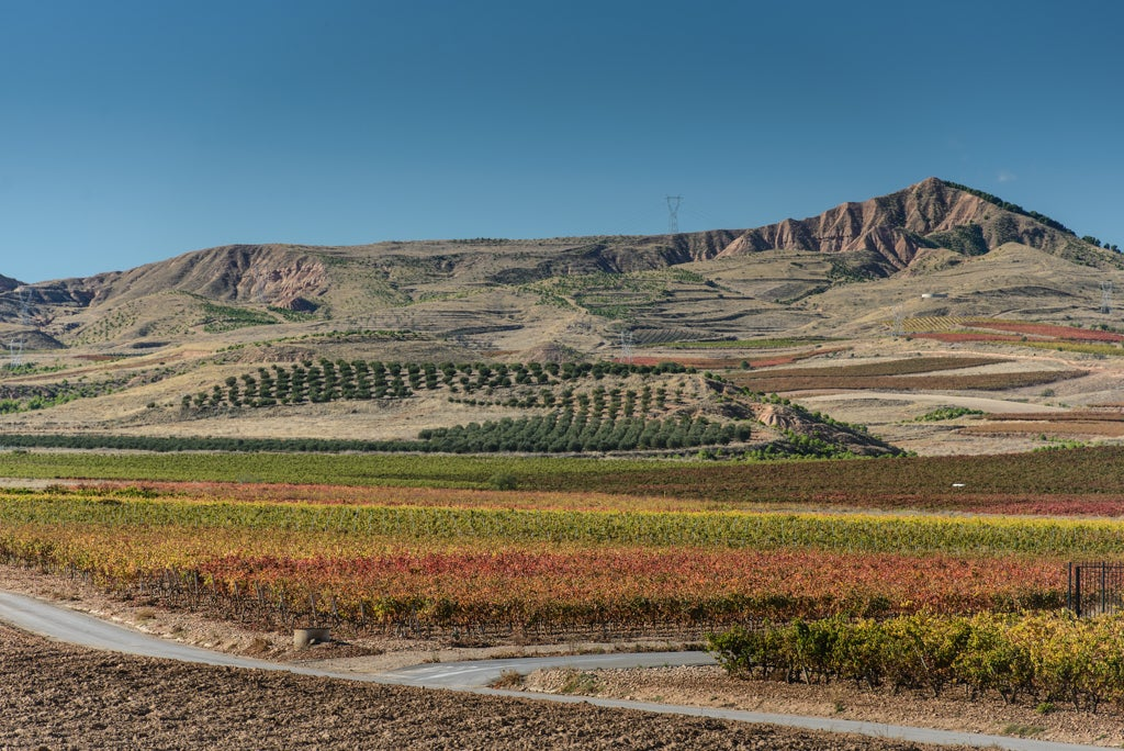 Ruiz Jiménez Vineyards