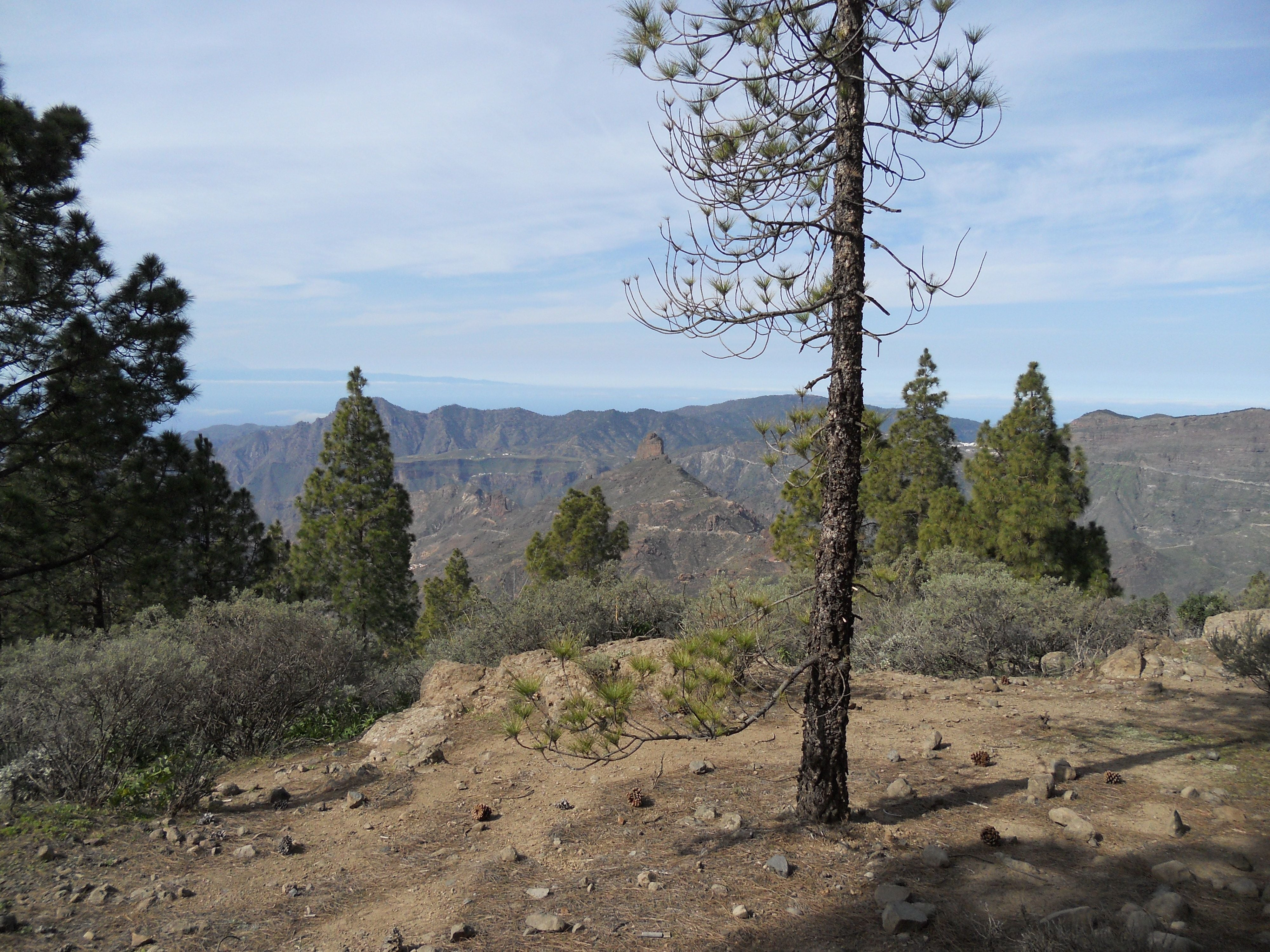 Forest in Transgrancanaria 2016 - 125 kms