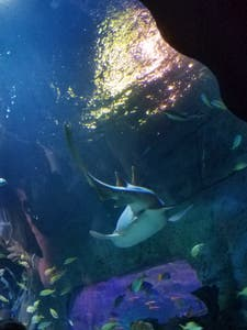 Jewel of the Sea Aquarium