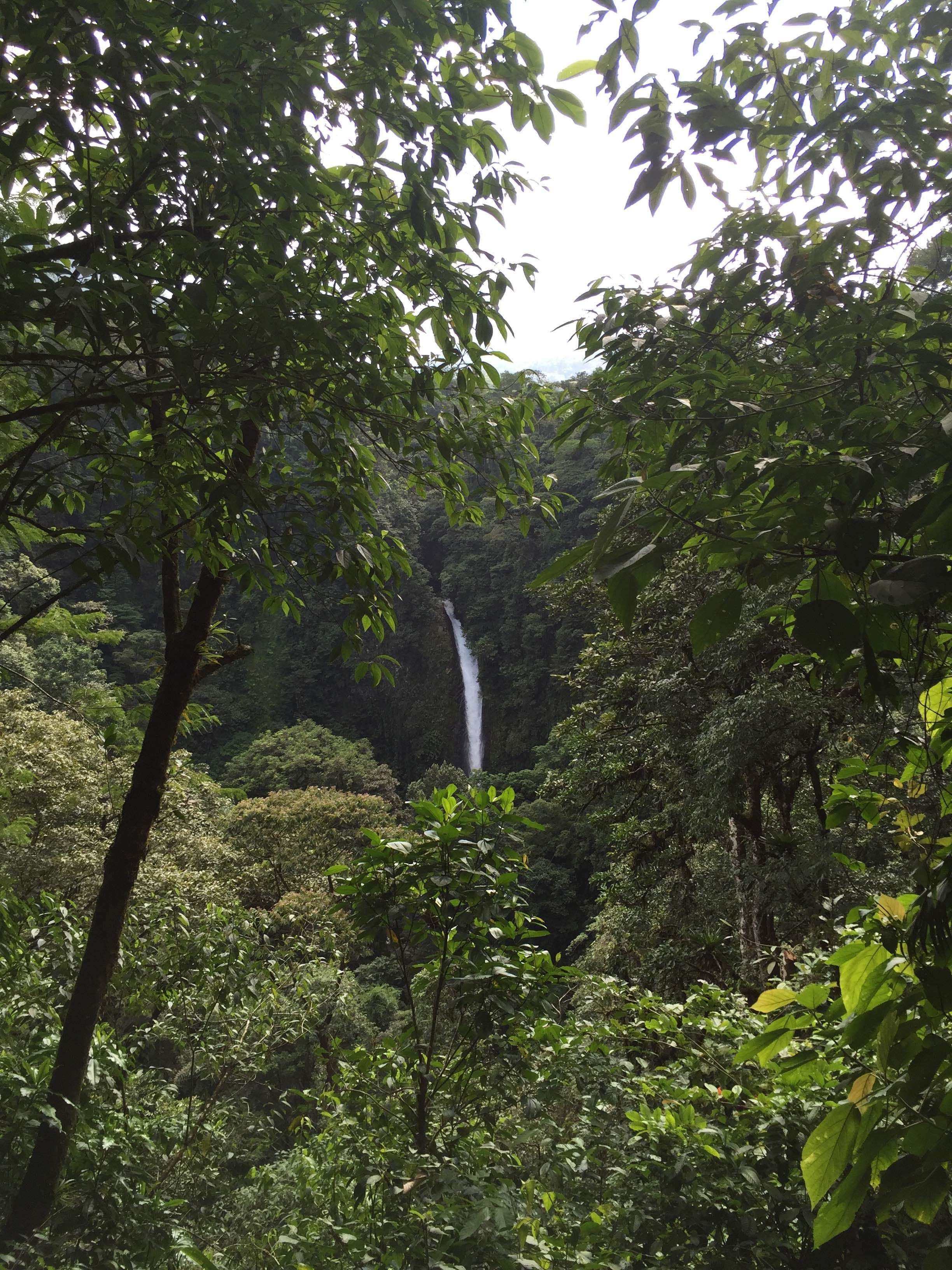 Bosque en Catarata de La Fortuna
