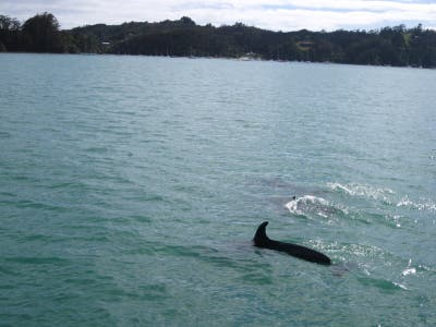 Discover Island Bay with Dolphins