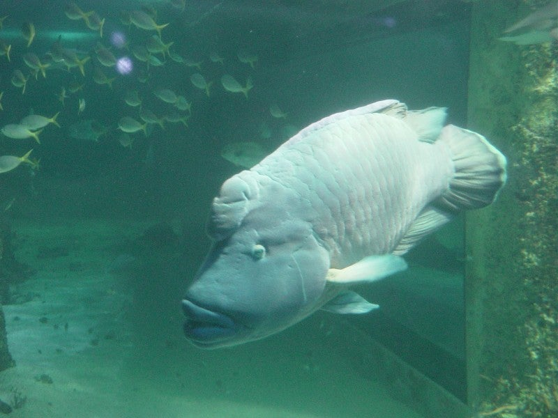 Acuario en Sea Life Aquarium