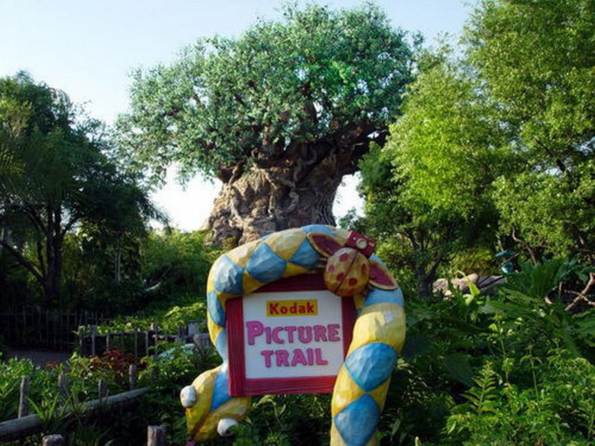 Parque en Disney Animal Kingdom