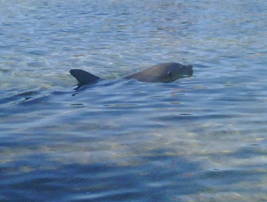 Animal en Discovery Cove