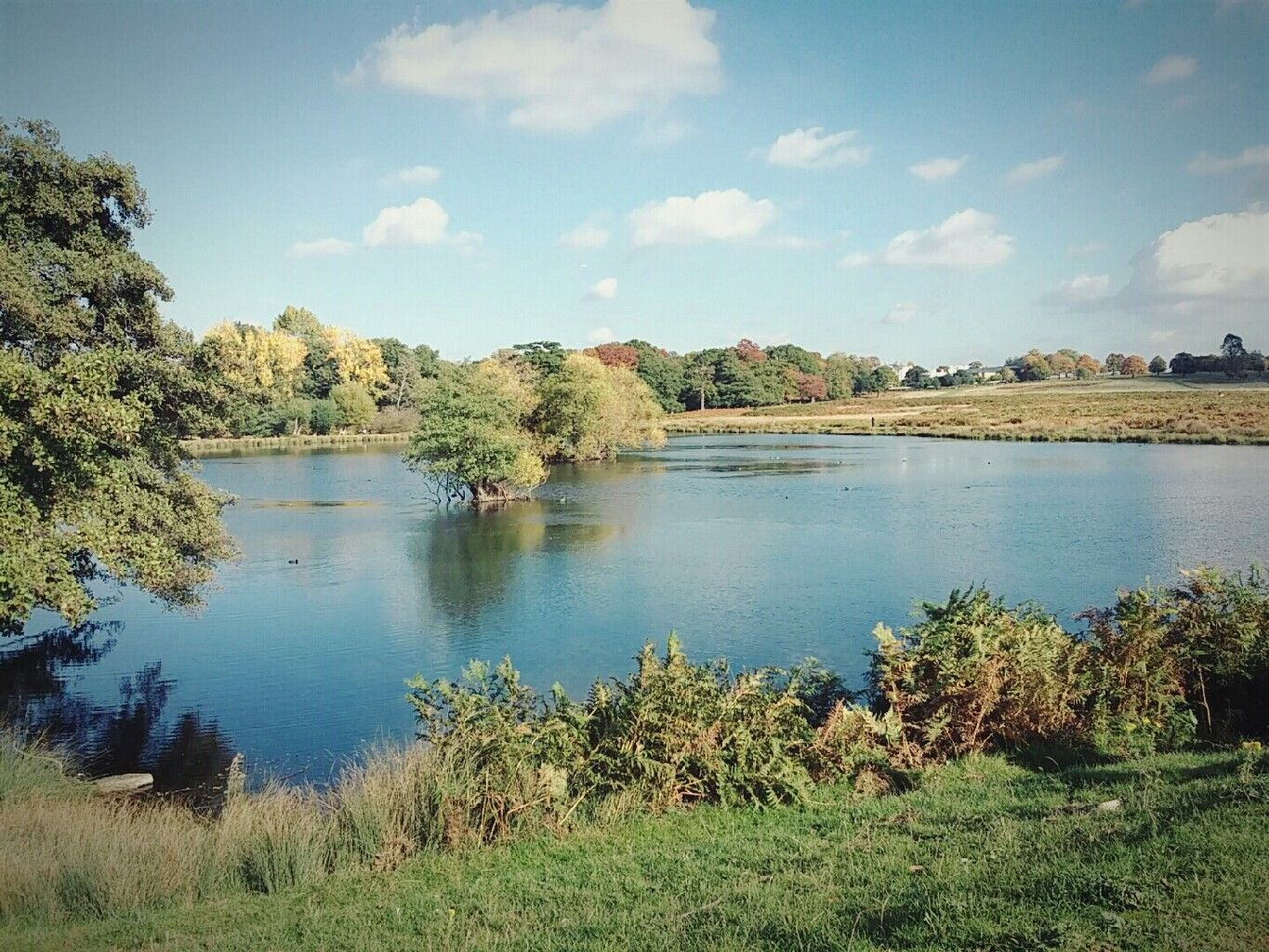 Lago de Richmond Park