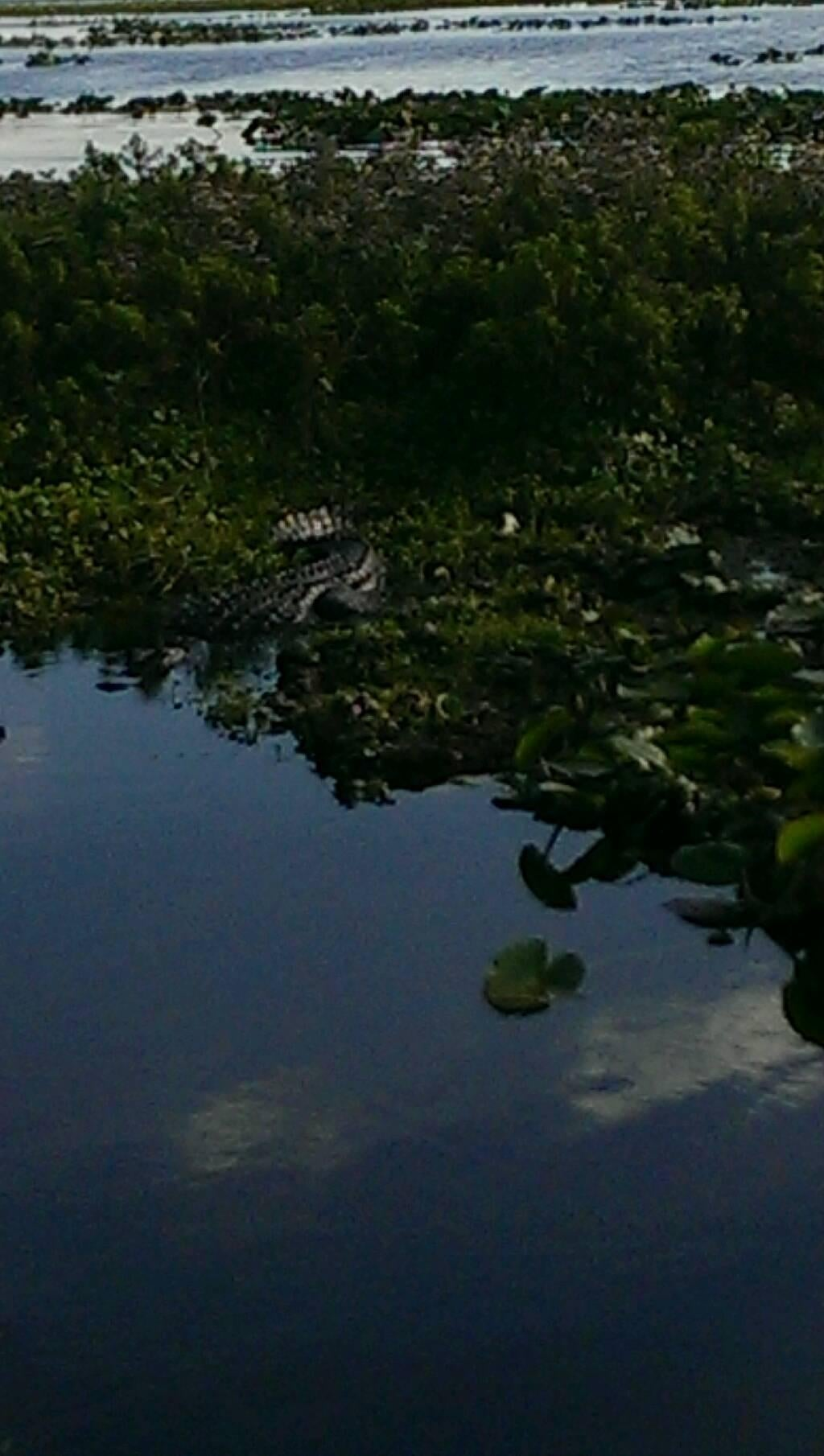 Bosque en Kissimmee Swamp Tours