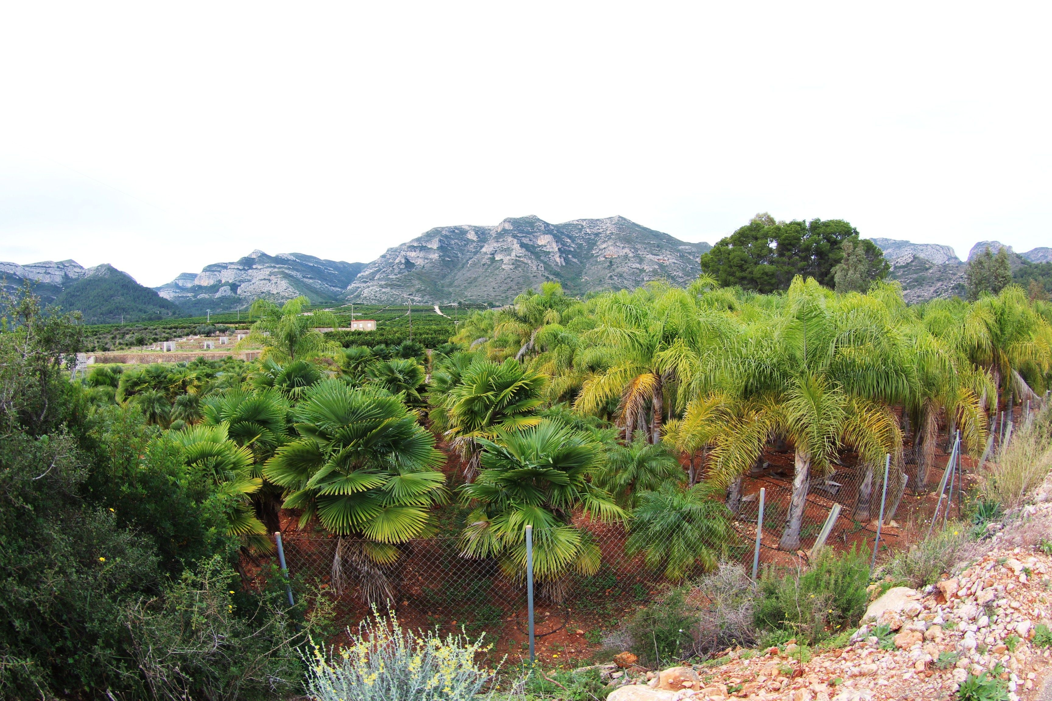 Vegetation in Ruta La Font de Lloret