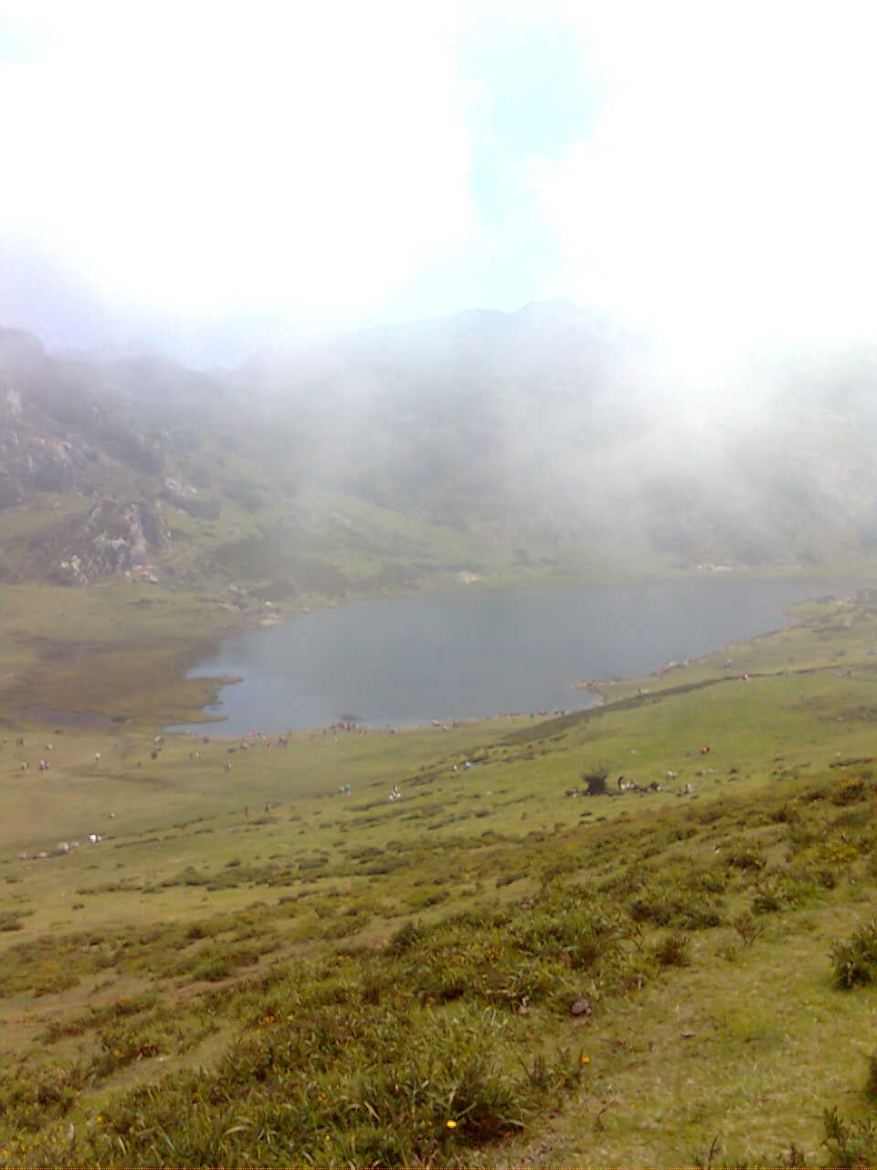 Grass in The Lakes of Covadonga - Enol and Ercina lakes