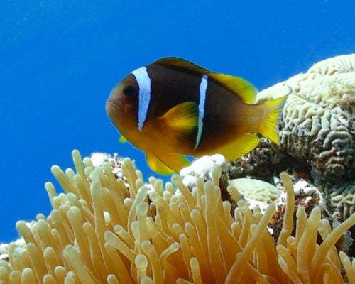 Diving in Ras Amira (Red Sea)