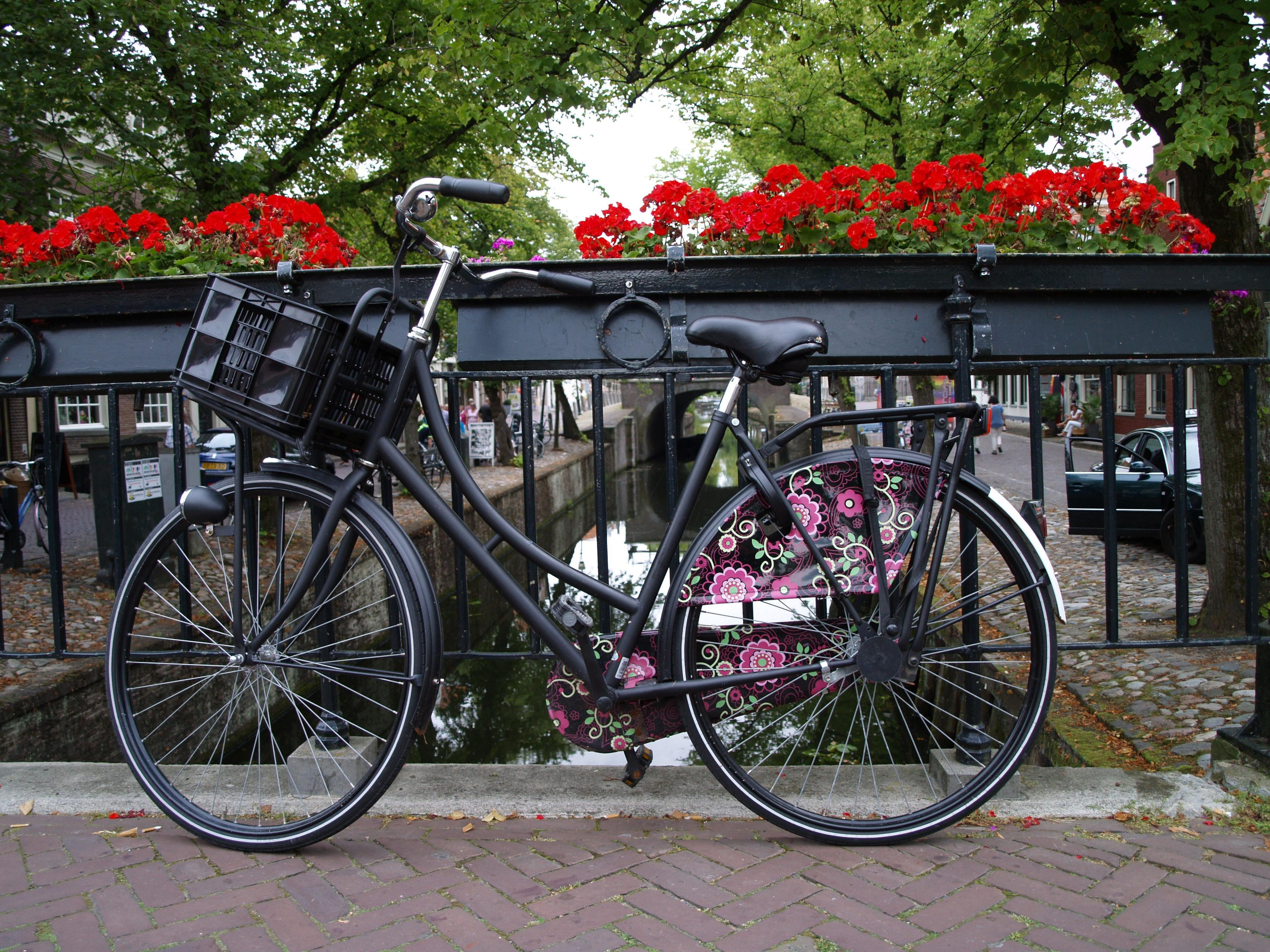 Color rosa en Edam