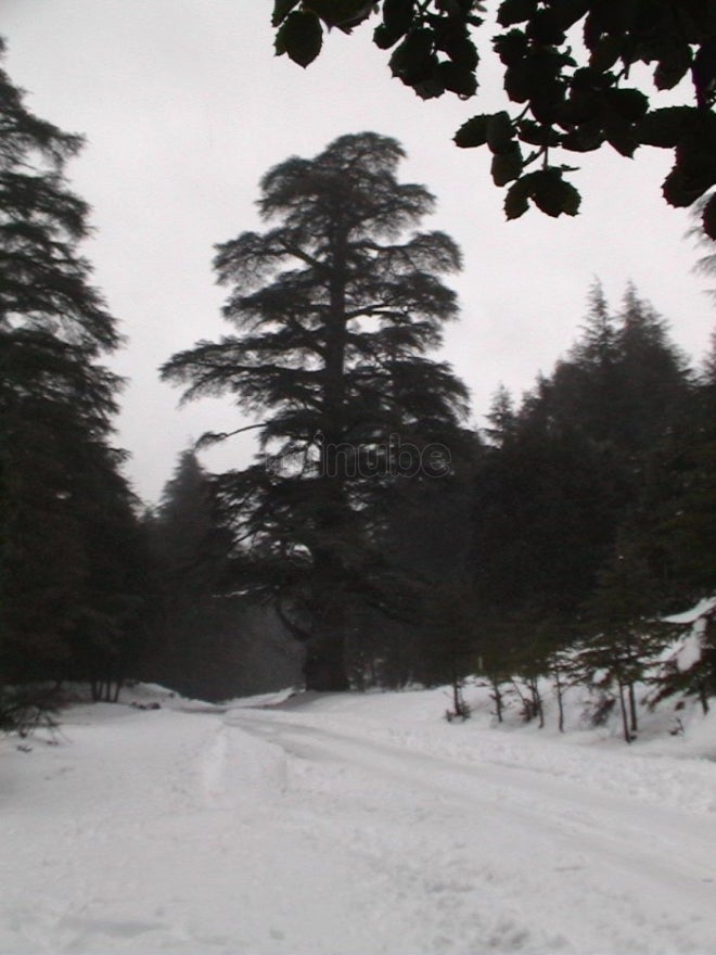Ifrane Forest