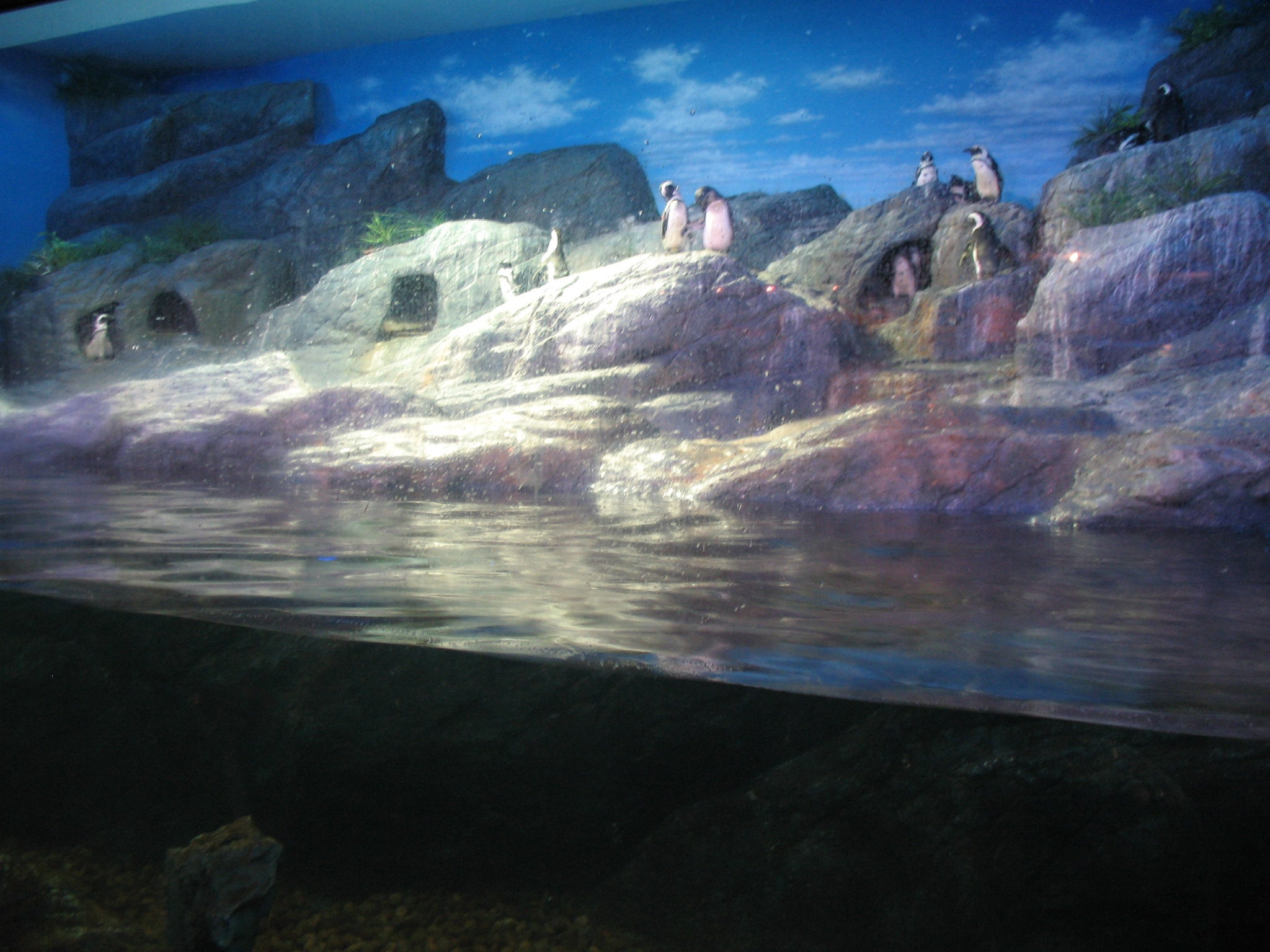 Orilla en Siam Ocean World
