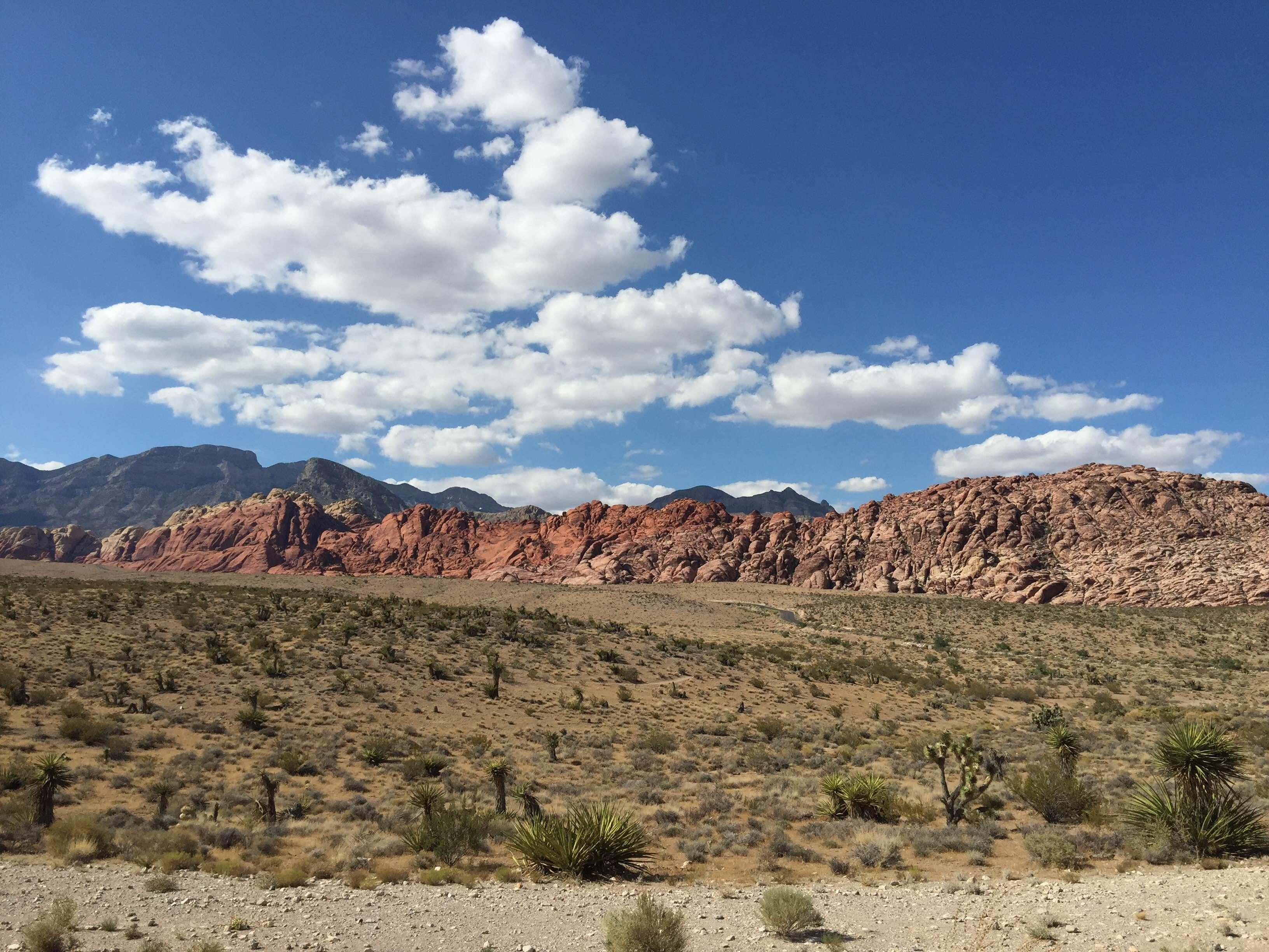 Rambla en Red Rock Canyon National Conservation Area