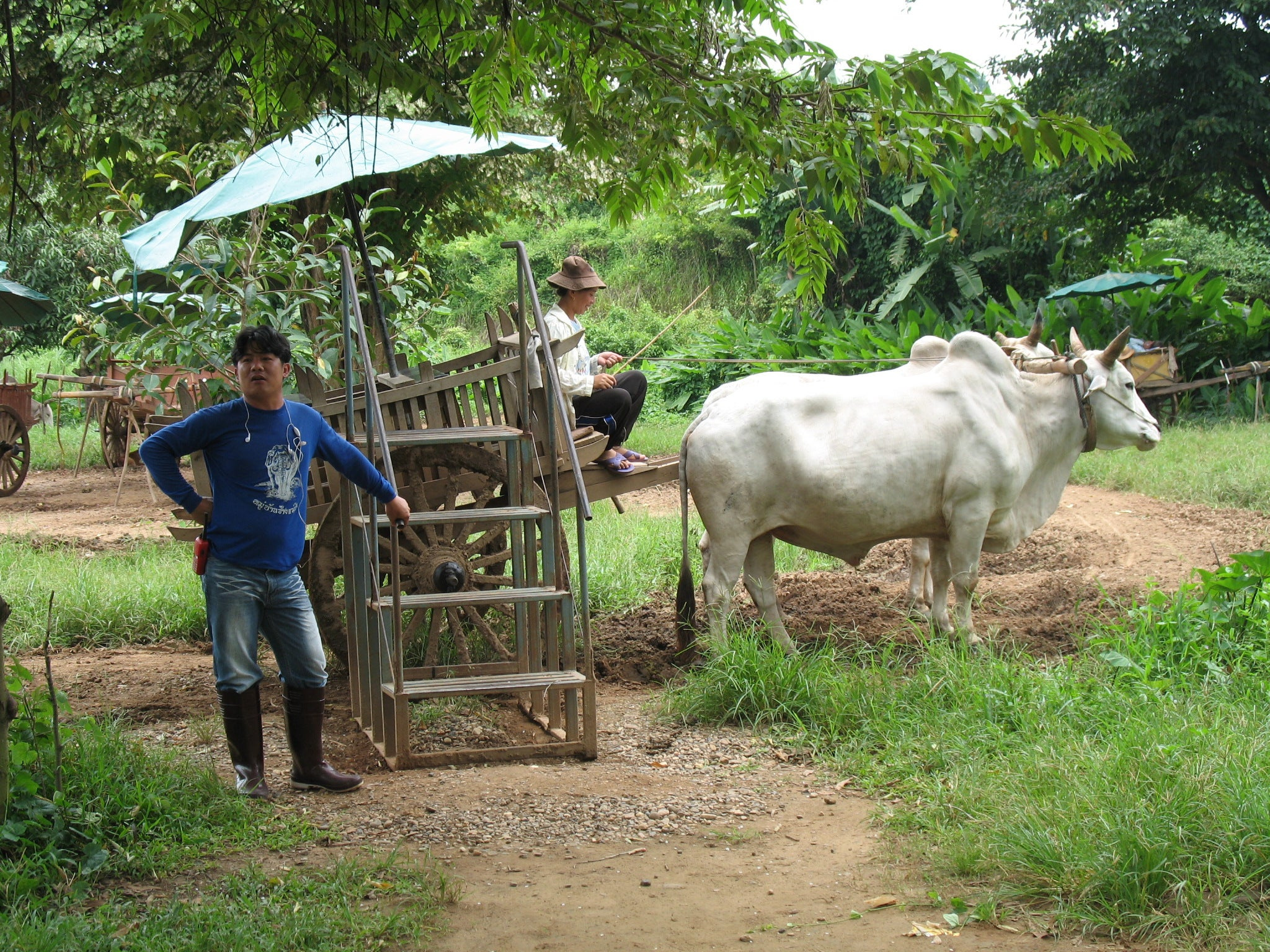 Oxcart Ride