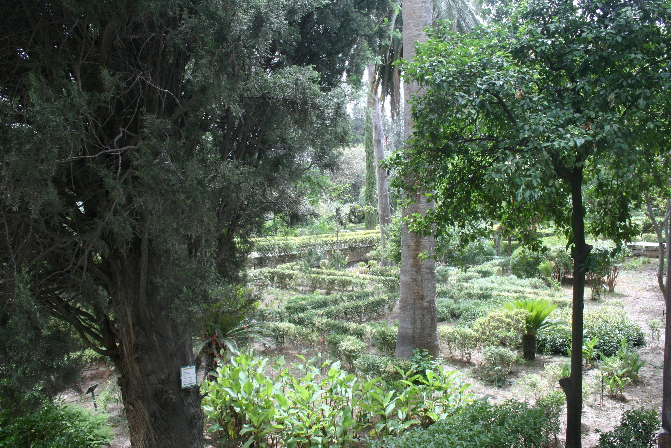 Bosque en Museo Dar Batha