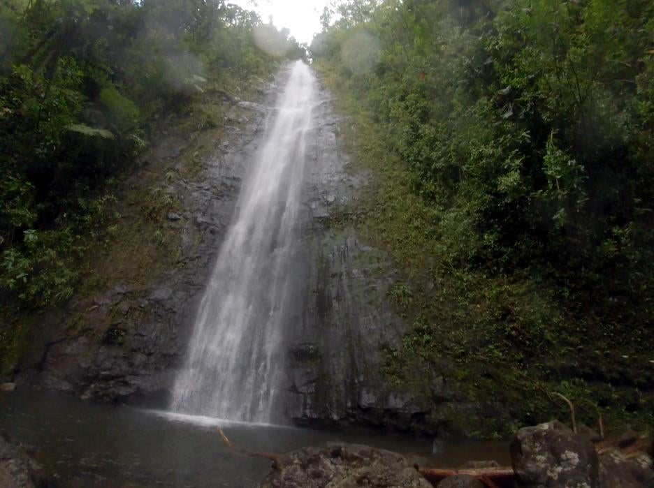 Manoa Fall