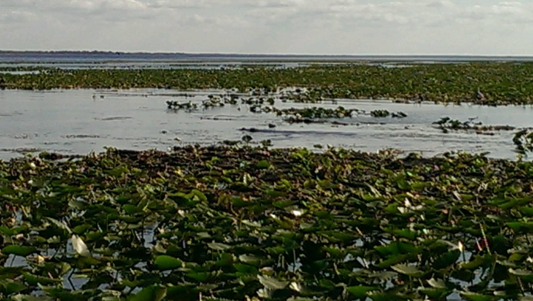 Estuario en Kissimmee Swamp Tours