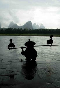 Cormoranes Fishing