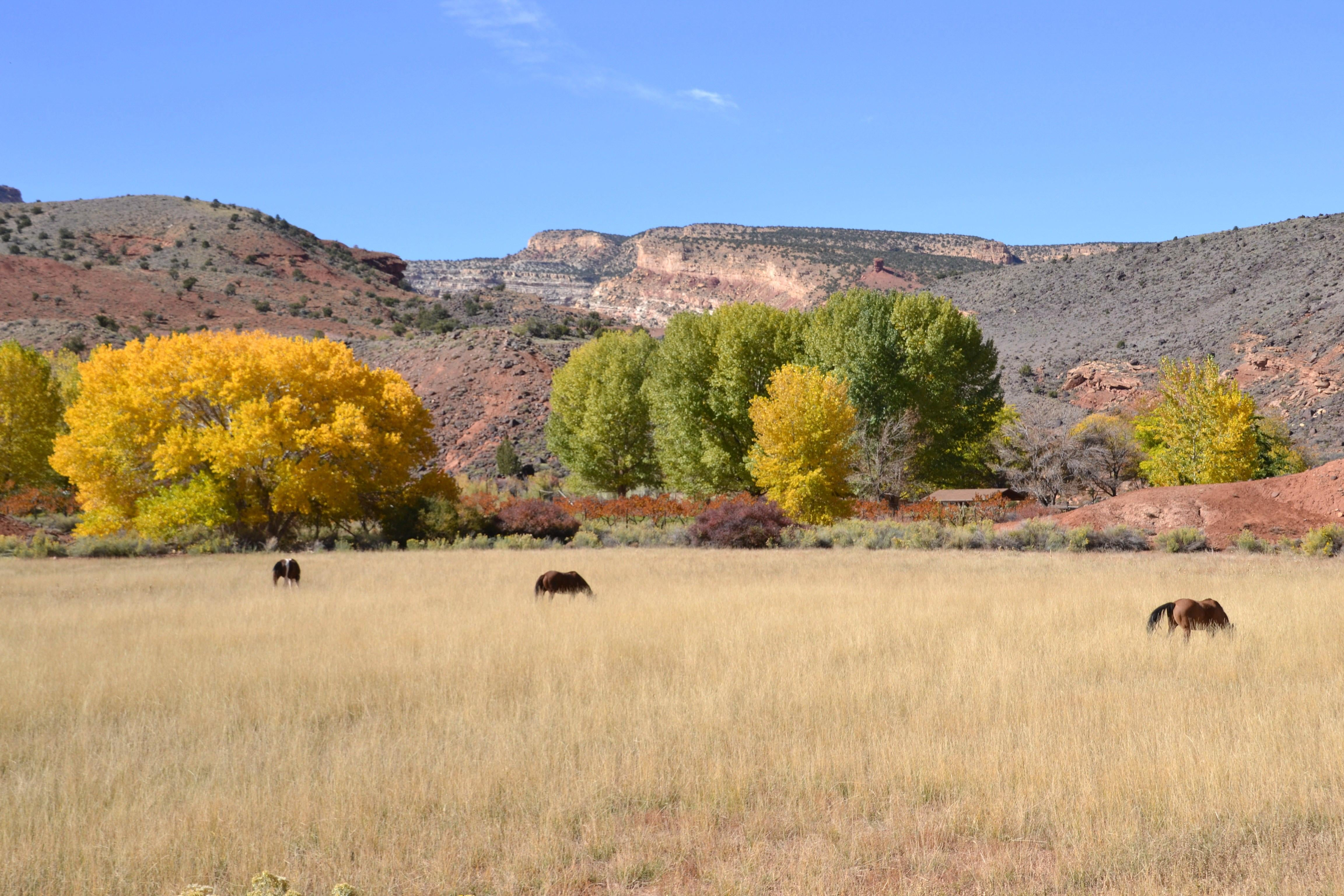 Pradera en Capitol Reef National Park
