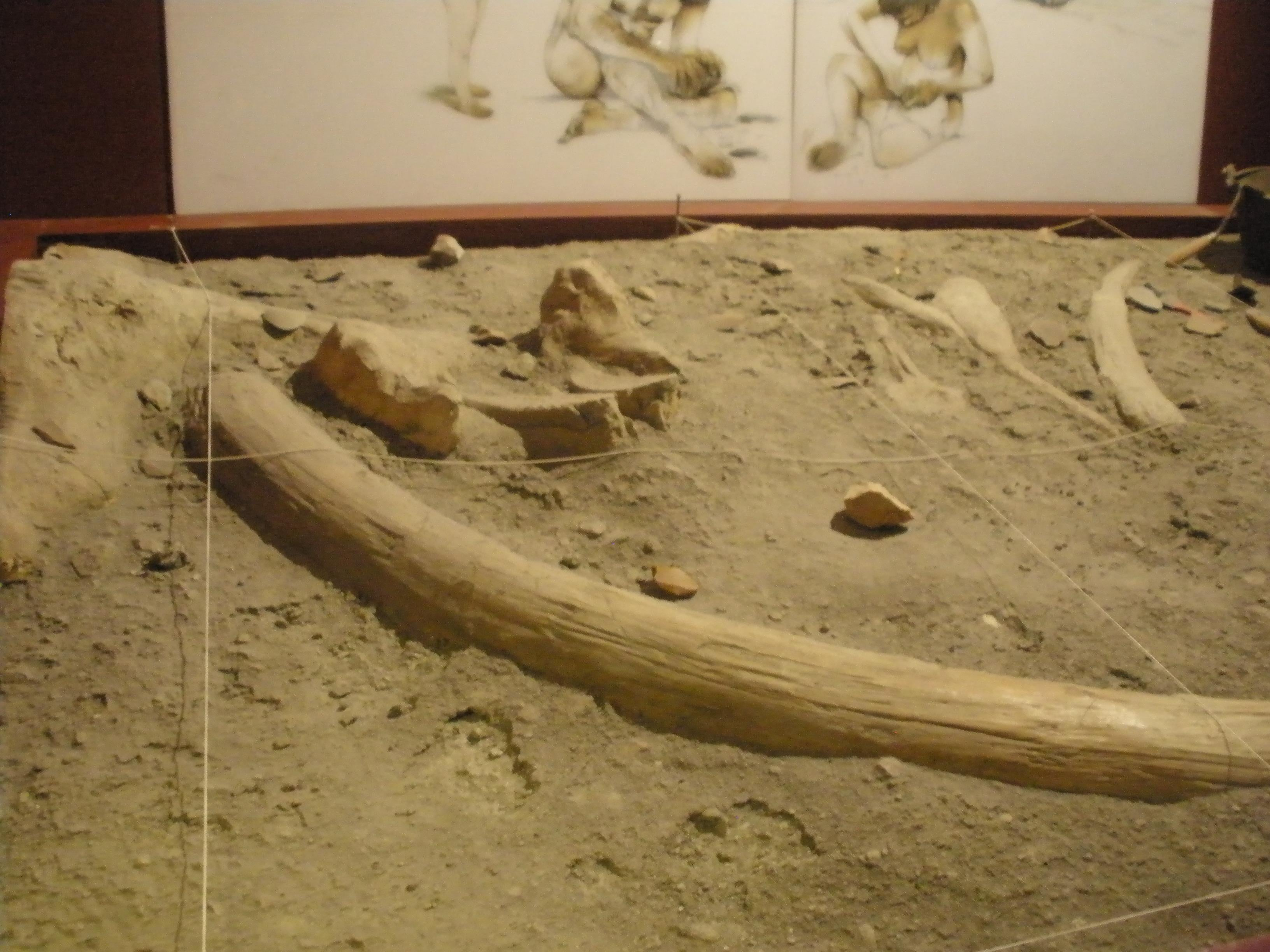 Arena en Museo Arqueológico Regional