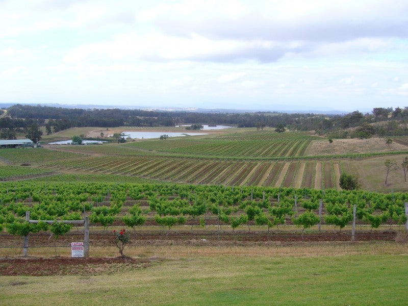 Llanura en Hunter Valley