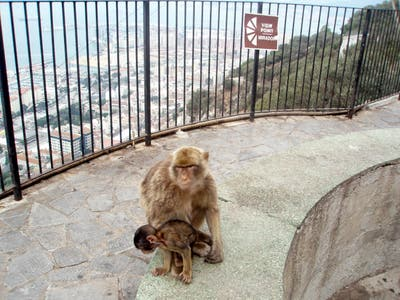 Viewpoint of the Monkeys