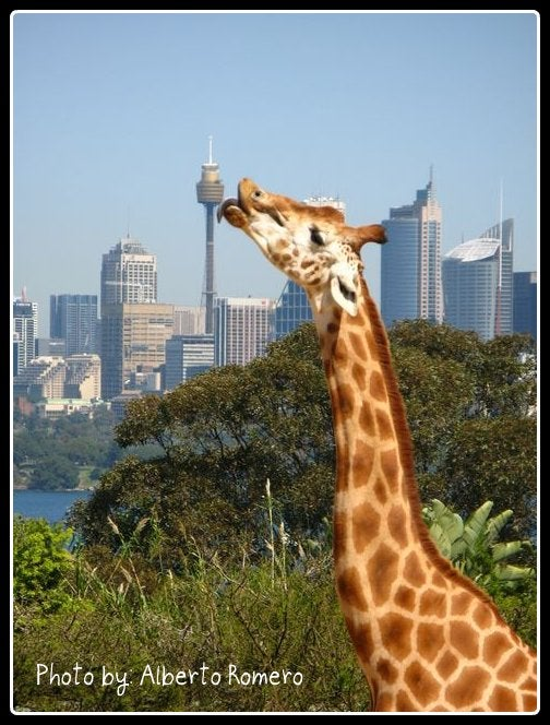 Animal en Sydney Tower