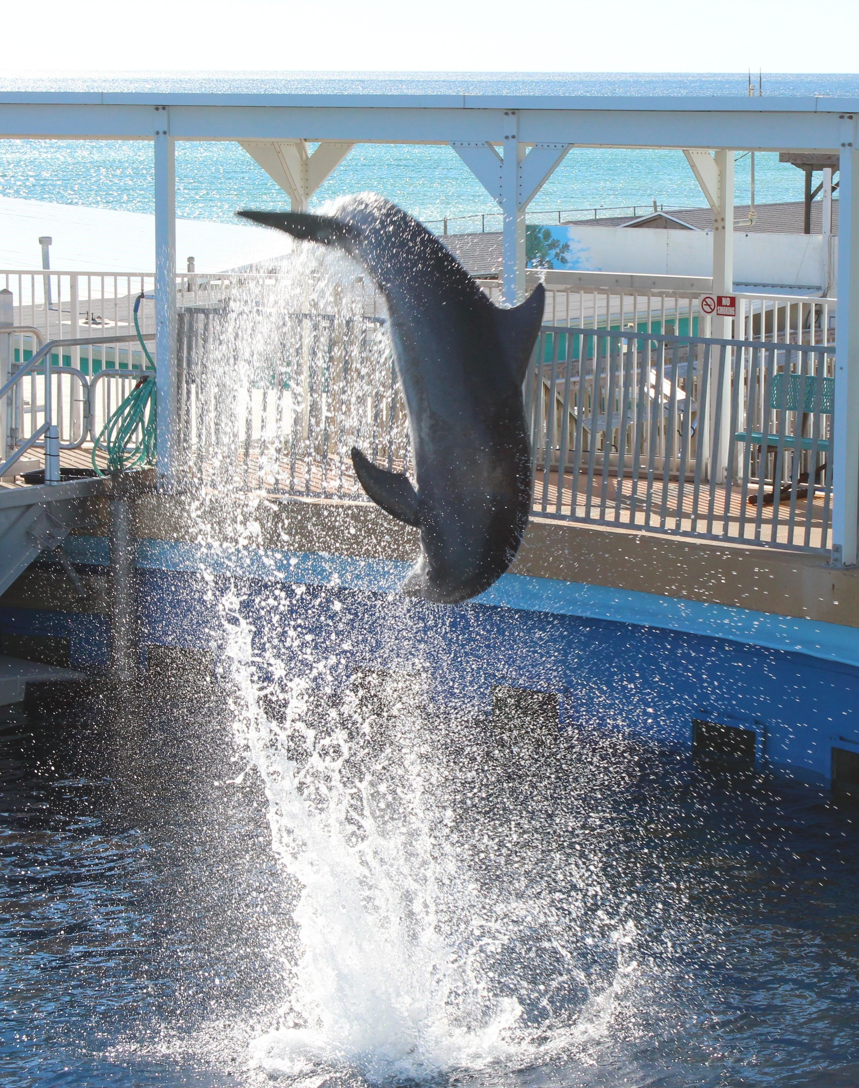 Animal en Gulfarium Marine Adventure park