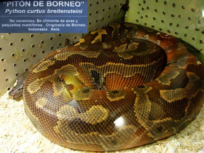 Serpentario Centro Anaconda