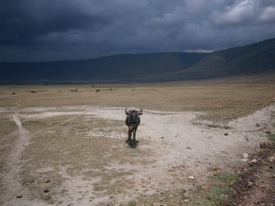 Parque Natural de Ngorongoro