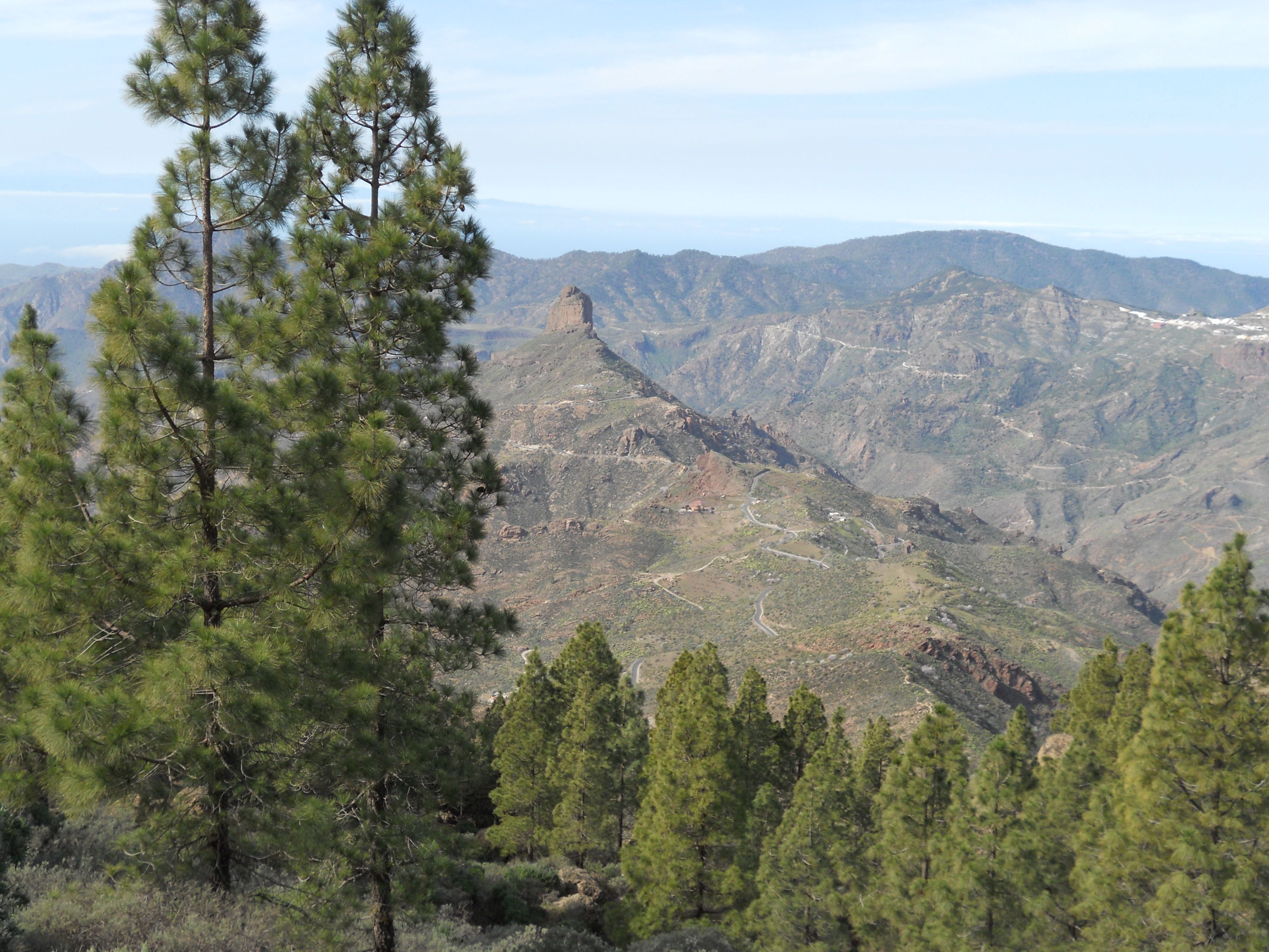 Temperate Coniferous Forest in Transgrancanaria 2016 - 125 kms
