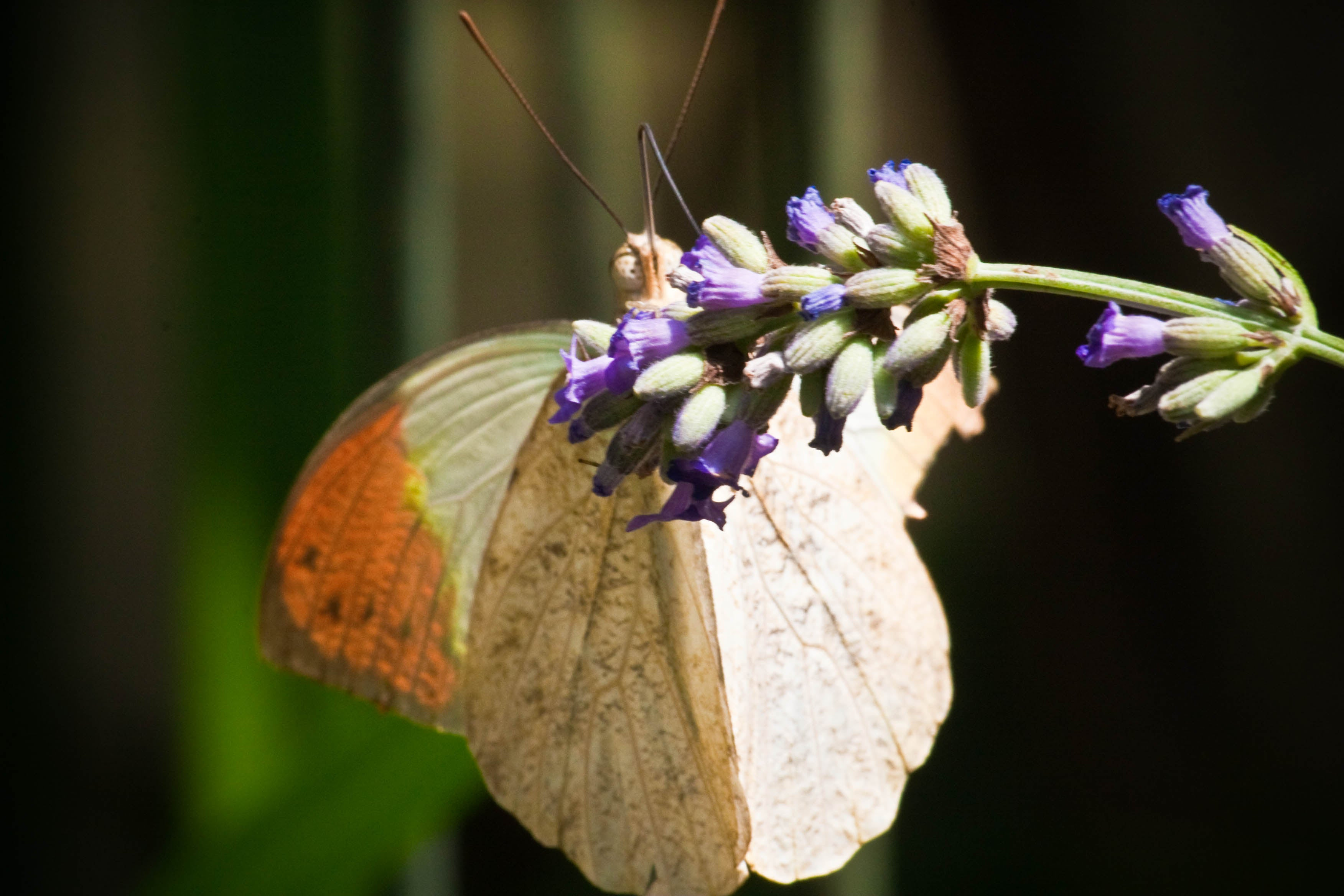 Flor en Collodi Butterfly House