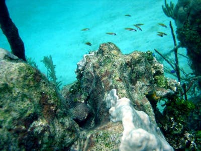 Coral Barrier of Belize