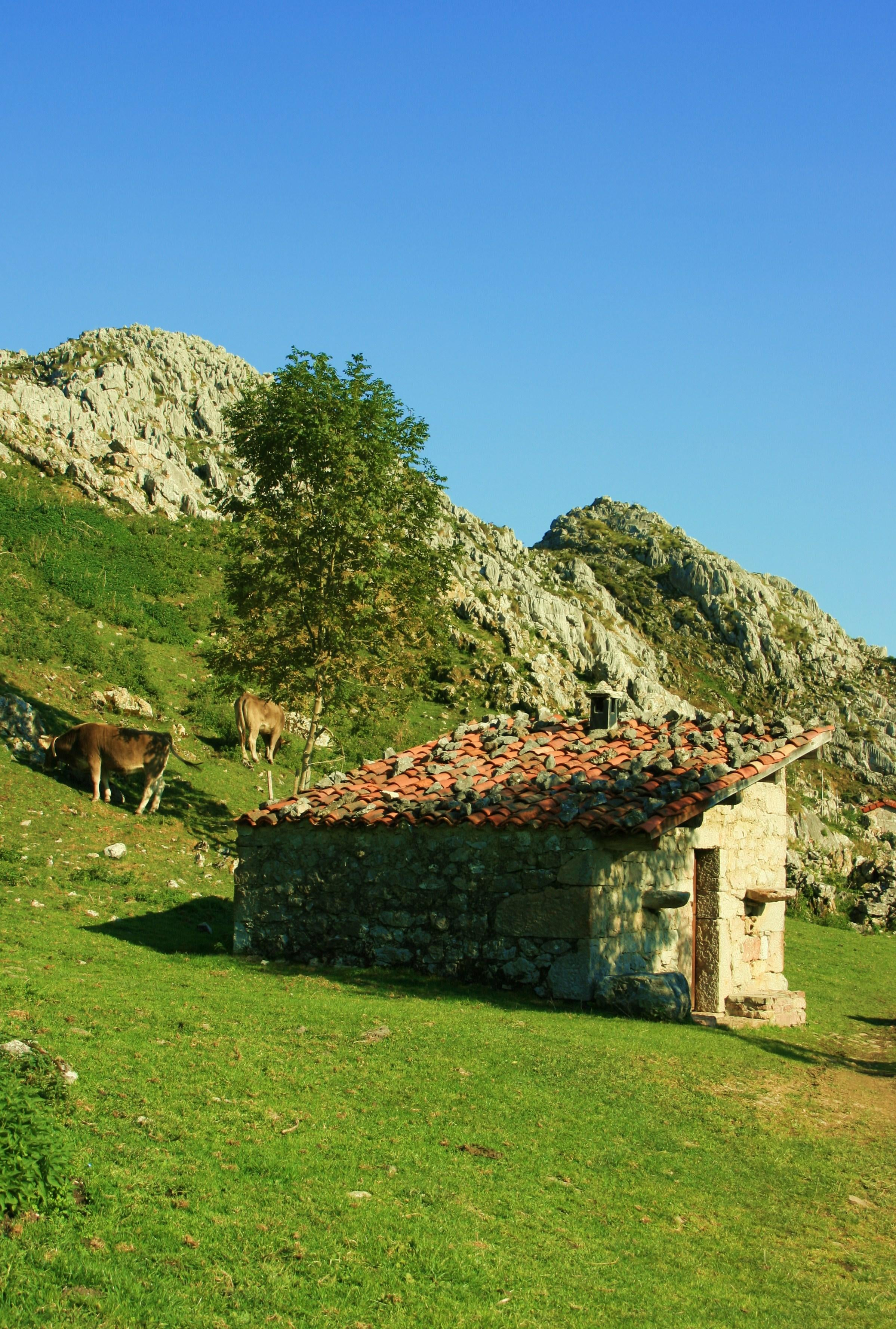Farmhouse in The Lakes of Covadonga - Enol and Ercina lakes