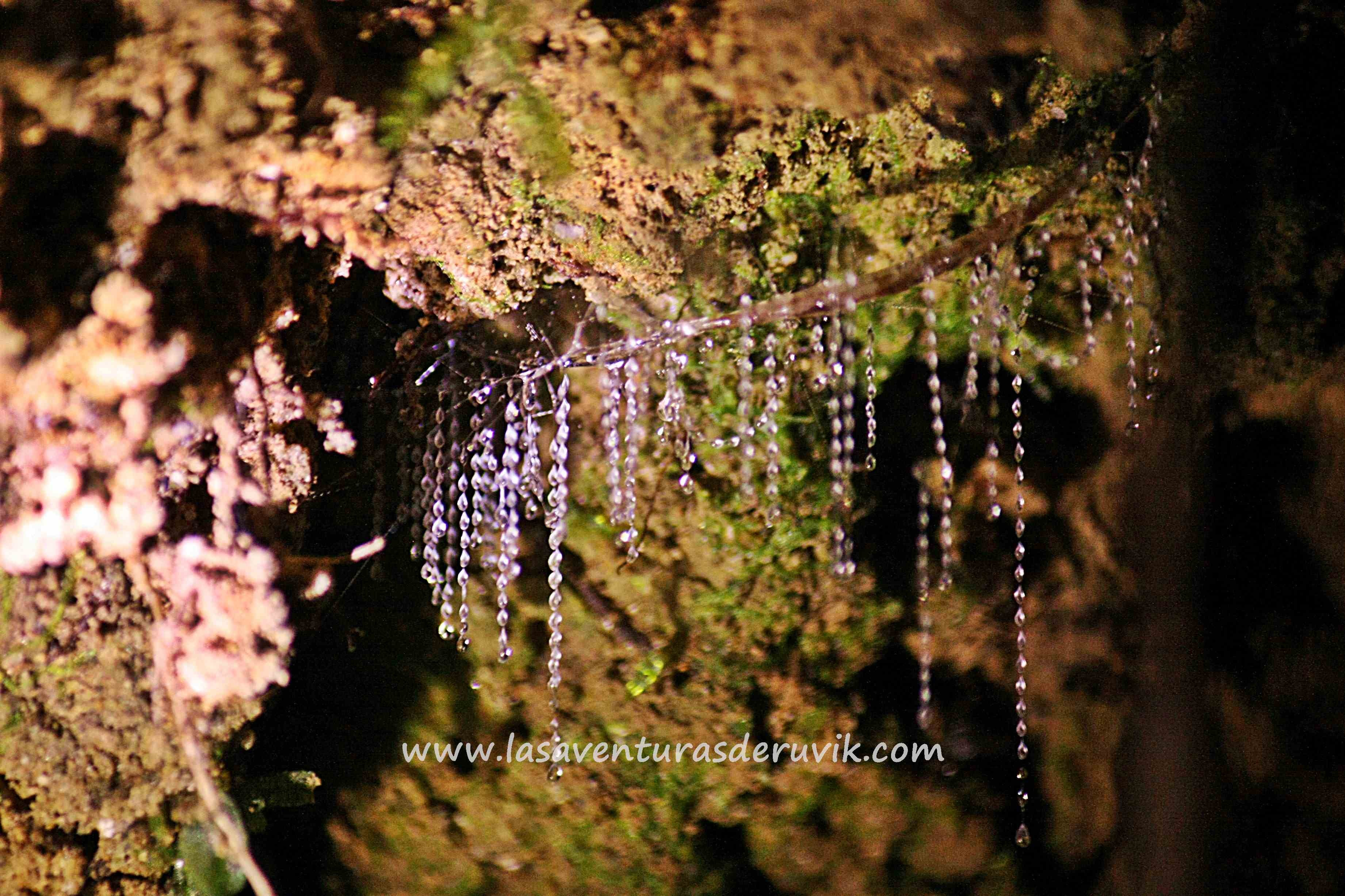 Glow Worms Track