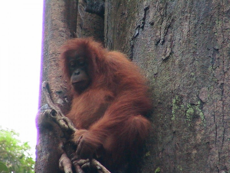 Animal en Bukit Lawang